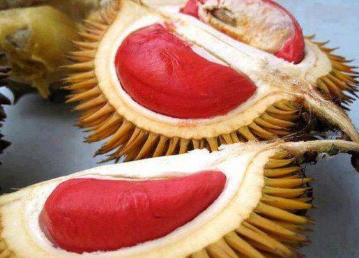 sầu riêng ruột đỏ