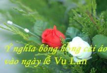 Ý nghĩa bông hồng cài áo vào ngày lễ vu lan