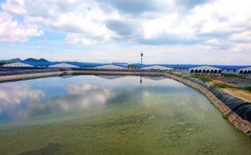 Xây trại heo khổng lồ ngay đầu nguồn cấp nước