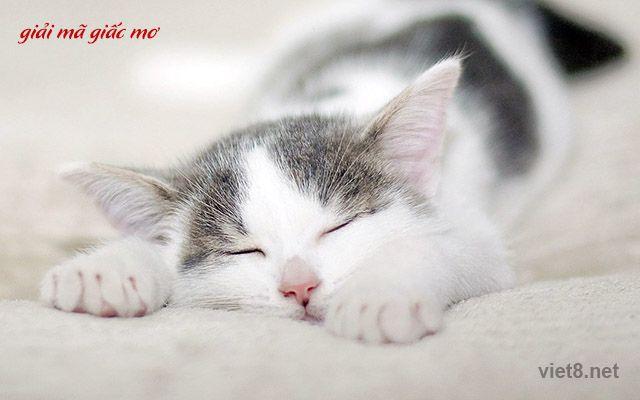 Nằm mơ thấy mèo đánh đề con gì? ảnh 1
