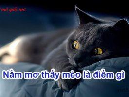 Nằm mơ thấy mèo là điềm gì
