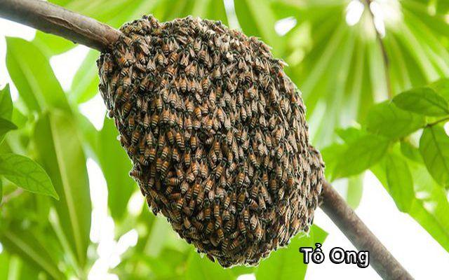 Ong làm tổ trong nhà là điềm báo gì ảnh 1