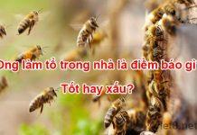 Ong làm tổ trong nhà là điềm báo gì
