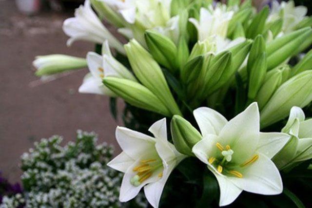 loài hoa tặng mẹ ý nghĩa nhất - ảnh 10