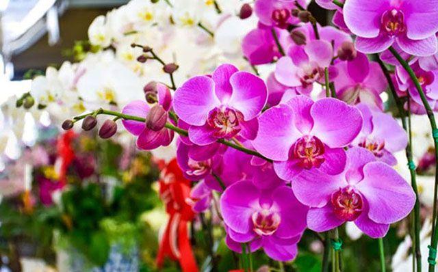 loài hoa tặng mẹ ý nghĩa nhất - ảnh 5