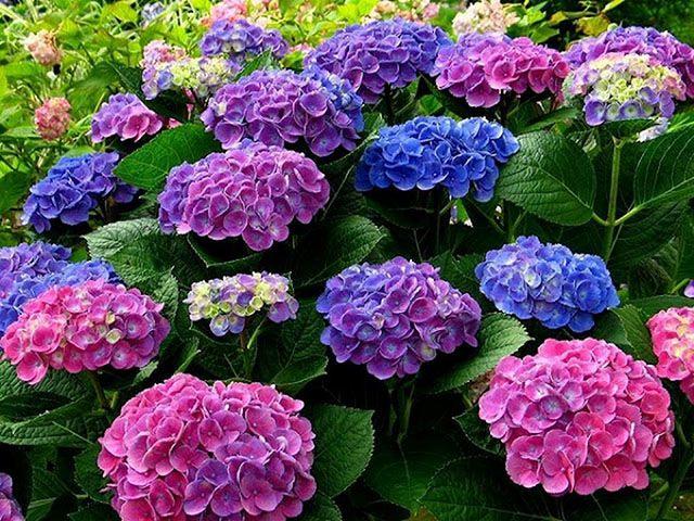 loài hoa tặng mẹ ý nghĩa nhất - ảnh 9